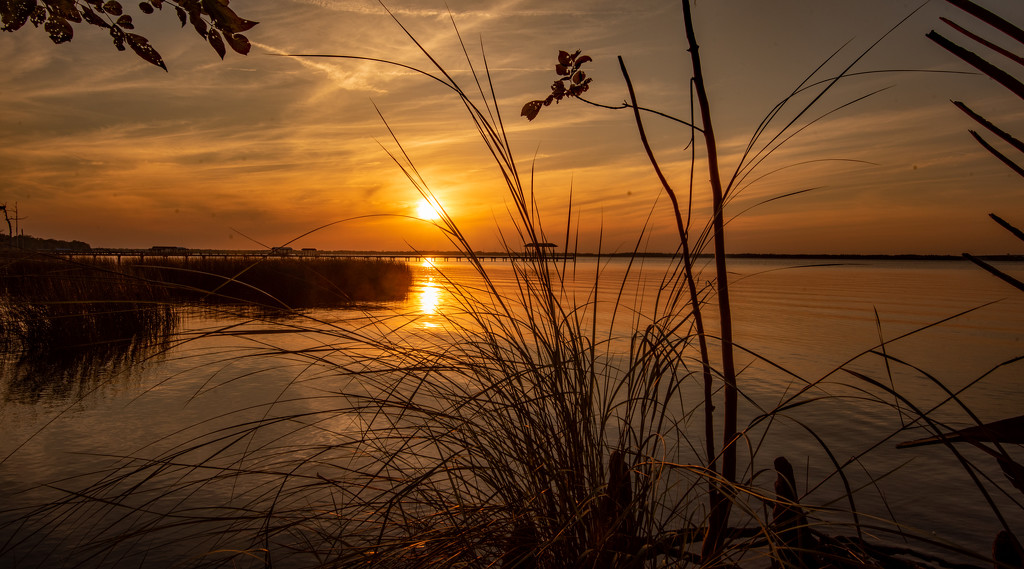 Sunset Behind the Reeds! by rickster549