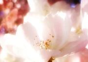 8th Apr 2021 - Spring blossom