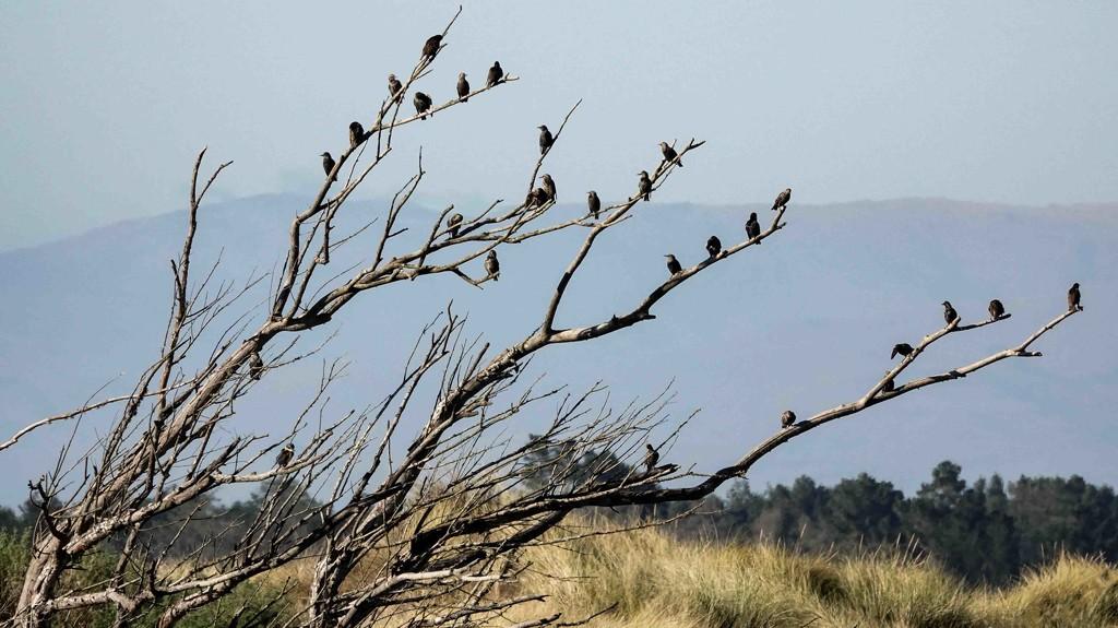 Starling meeting by maureenpp