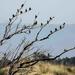 Starling meeting