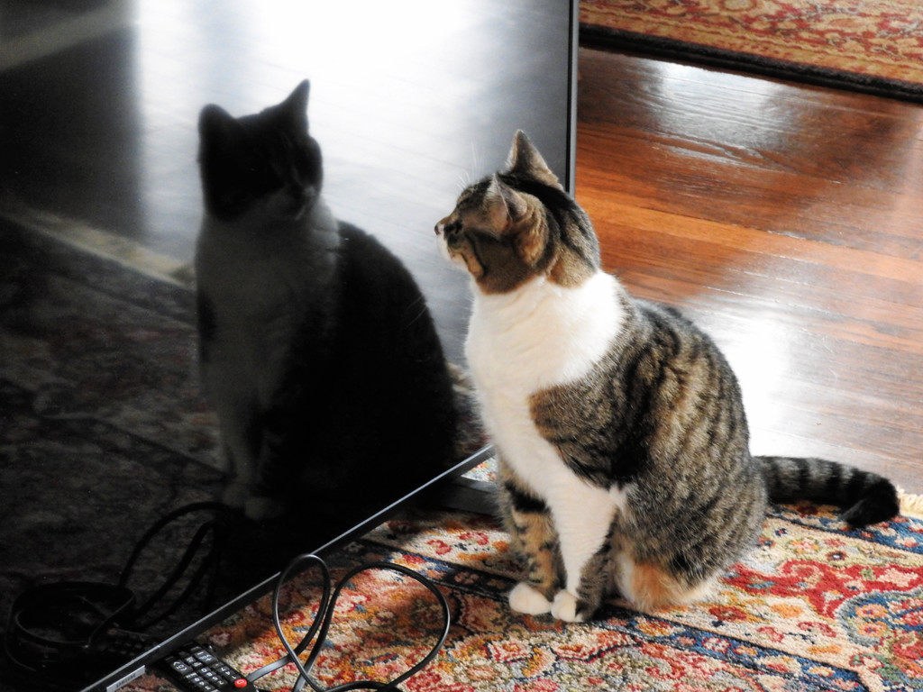 Purrfect Reflection by seattlite
