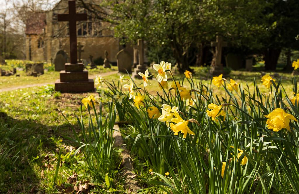 Daffodils in the sun by peadar