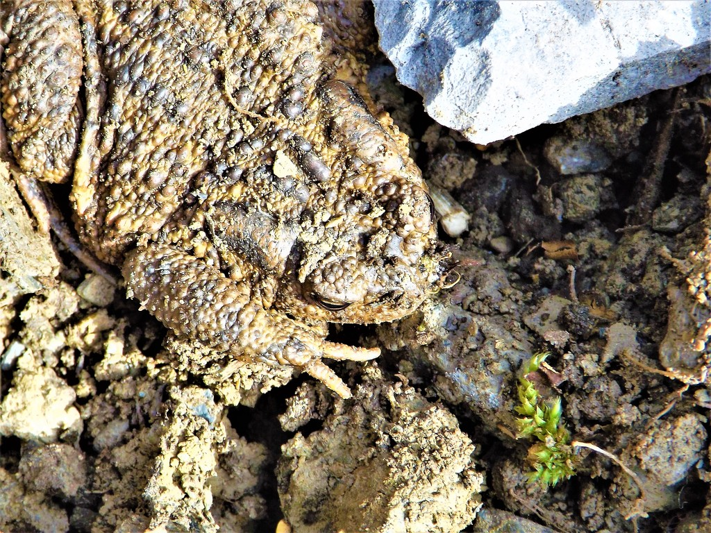 Rude Mr Toad by ajisaac