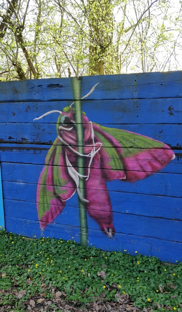 Elephant Hawk Moth by roachling