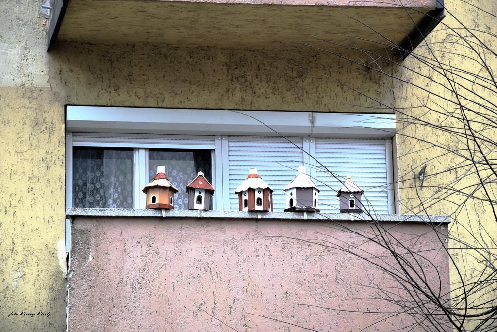 Bird-friendly balcony by kork