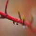 Spring Raindrops  by tosee