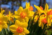 8th Apr 2021 - April Flowers
