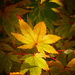 Autumn leaf in the light by maureenpp