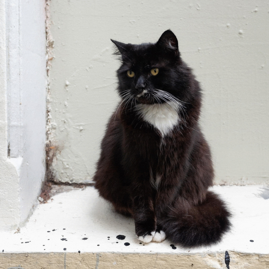 Sylvester - The Cat by yaorenliu