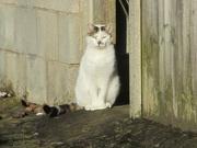 9th Apr 2021 - A neighbourhood cat enjoying morning sunshine.