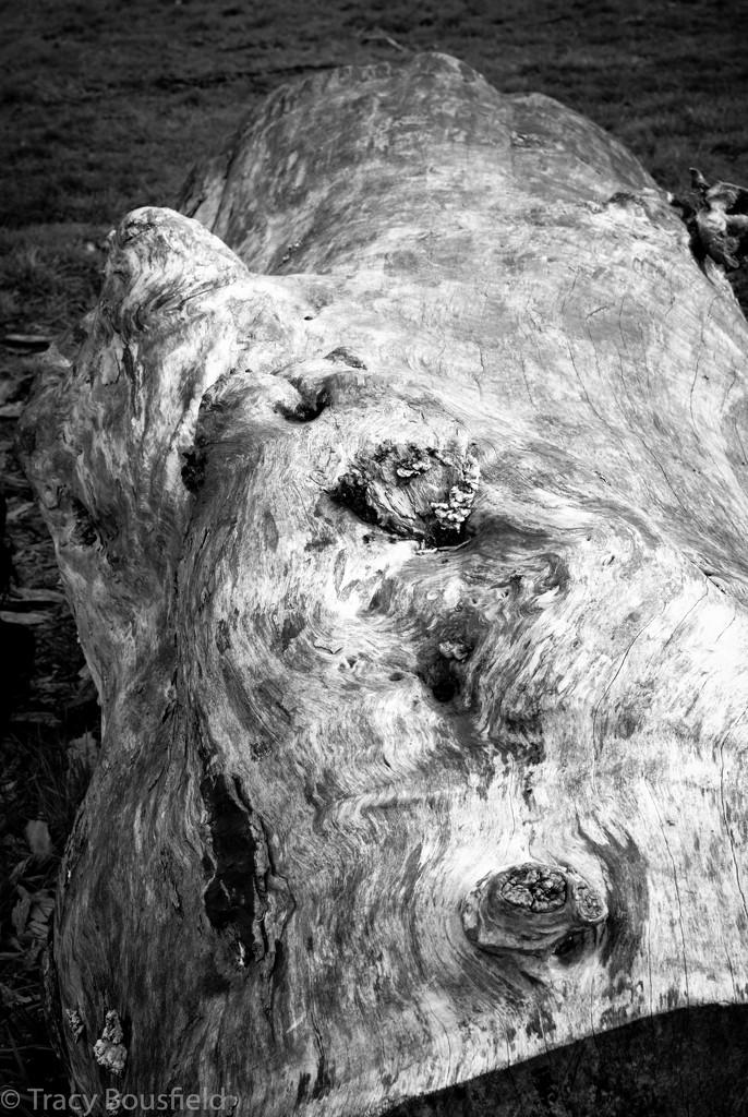 Log by tracybeautychick