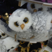 9th Apr 2021 - Owls #1:  Fluffy Owl