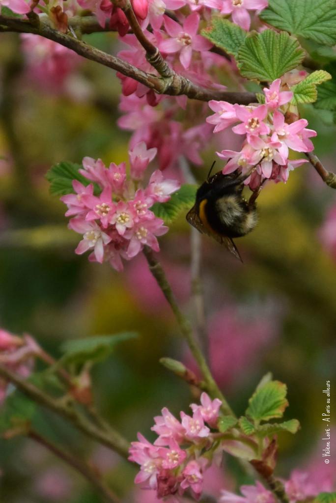 bumblebee butt by parisouailleurs