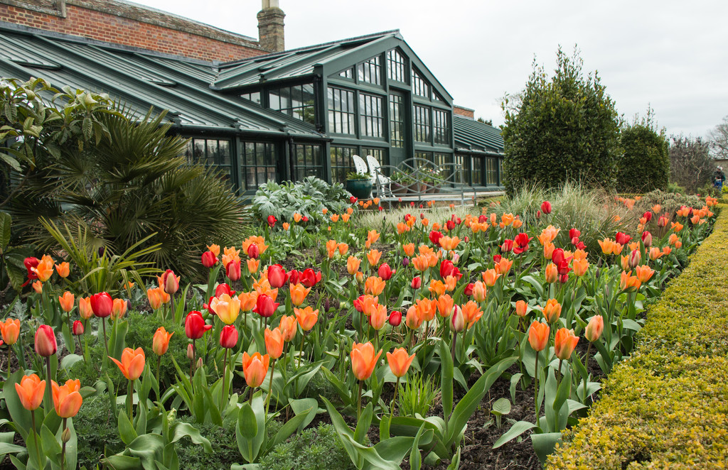Tulips at Wimpole Hall by busylady