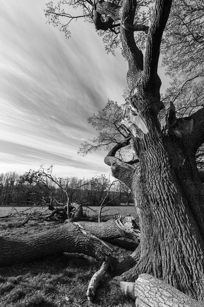 Broken branches by rumpelstiltskin