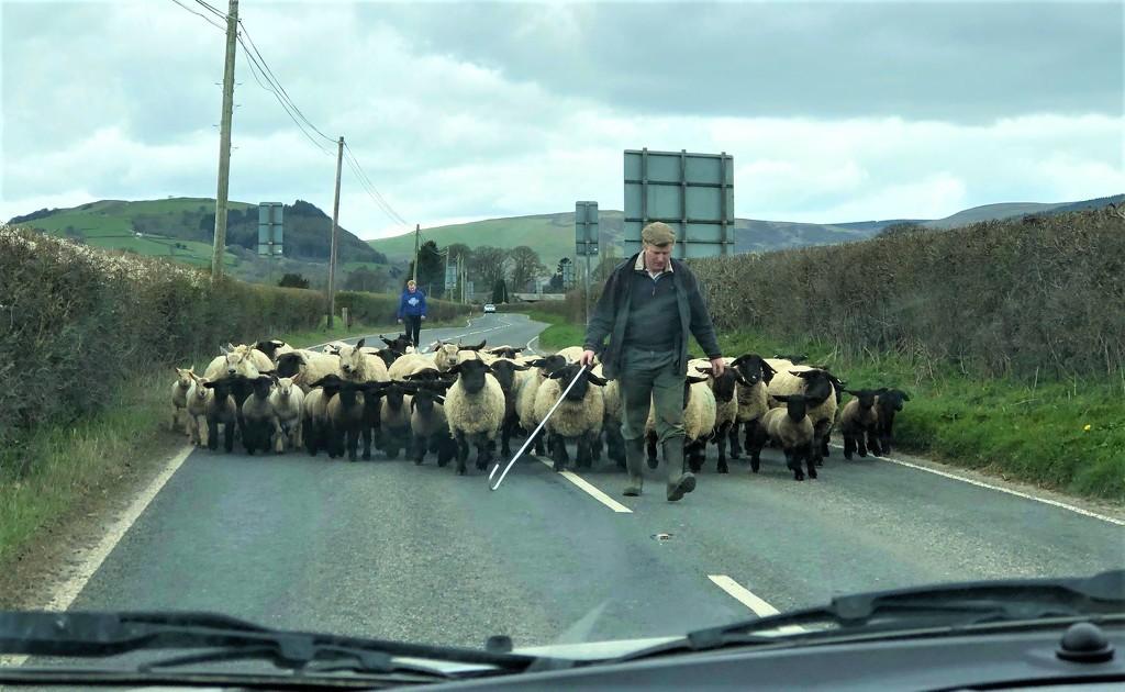 Welsh Border Patrol by susiemc