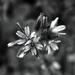 Tiny Tiny White Flowers
