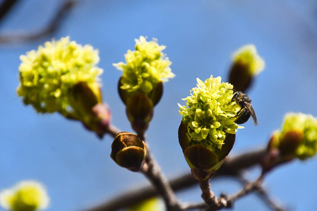 Spring by vera365