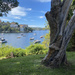 7 Days of Cremorne Point Loop walk - 6