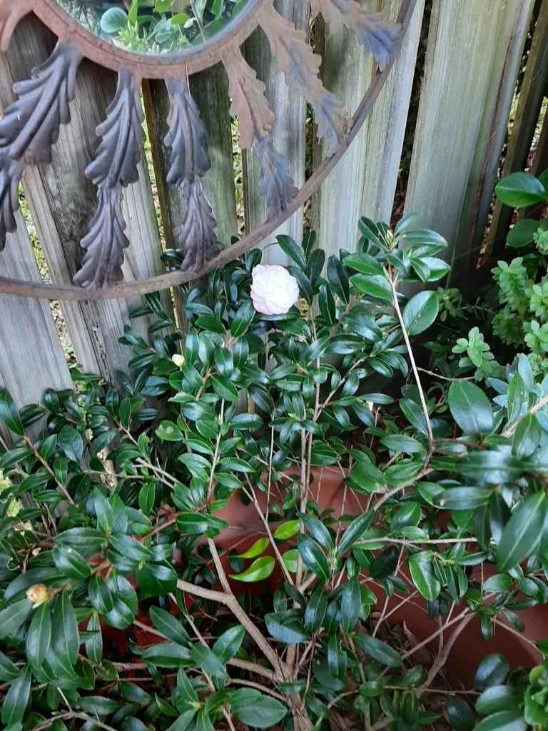 Second Bloom  by mozette