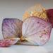 dried hydrangea petal