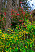 9th Apr 2021 - Spring Colours