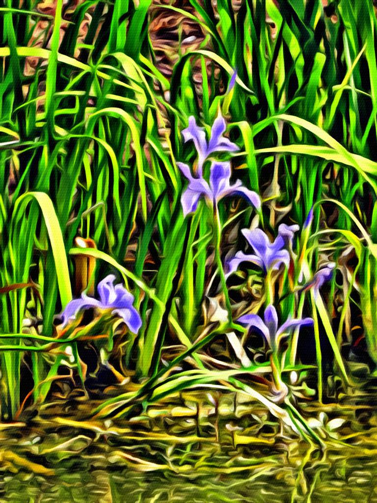 Irises by Van Gogh 2 by homeschoolmom