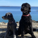 My Doggies by frantackaberry