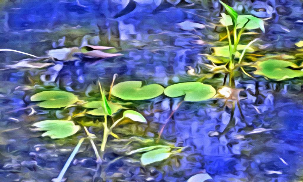Painted waterlilies by homeschoolmom