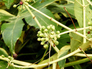 8th Apr 2021 - COVID flower