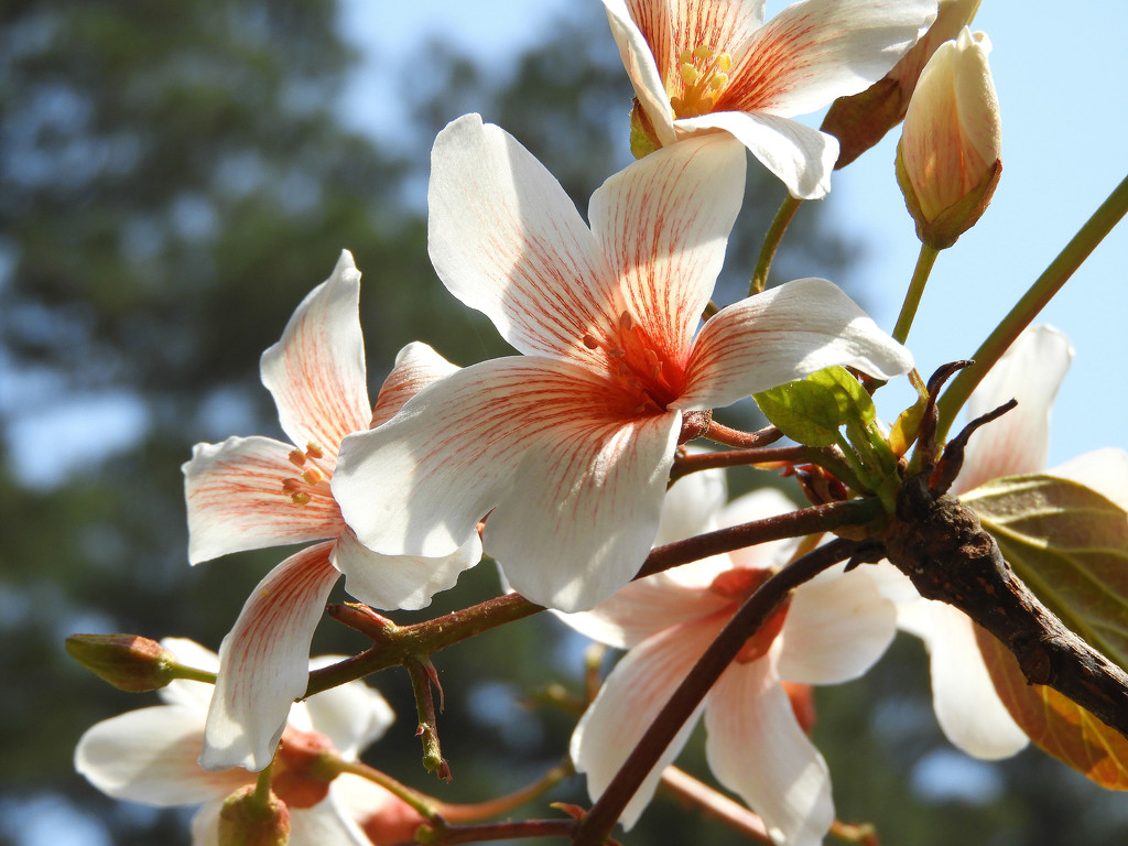 Spring is blossoming by homeschoolmom