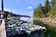 10th Apr 2021 - Whaler Bay Galiano Island