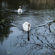 9th Apr 2021 - On the Mill Pond