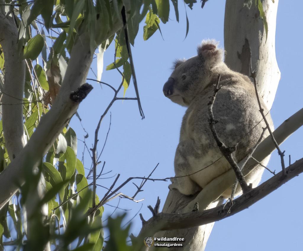 a nice spot in the sun by koalagardens