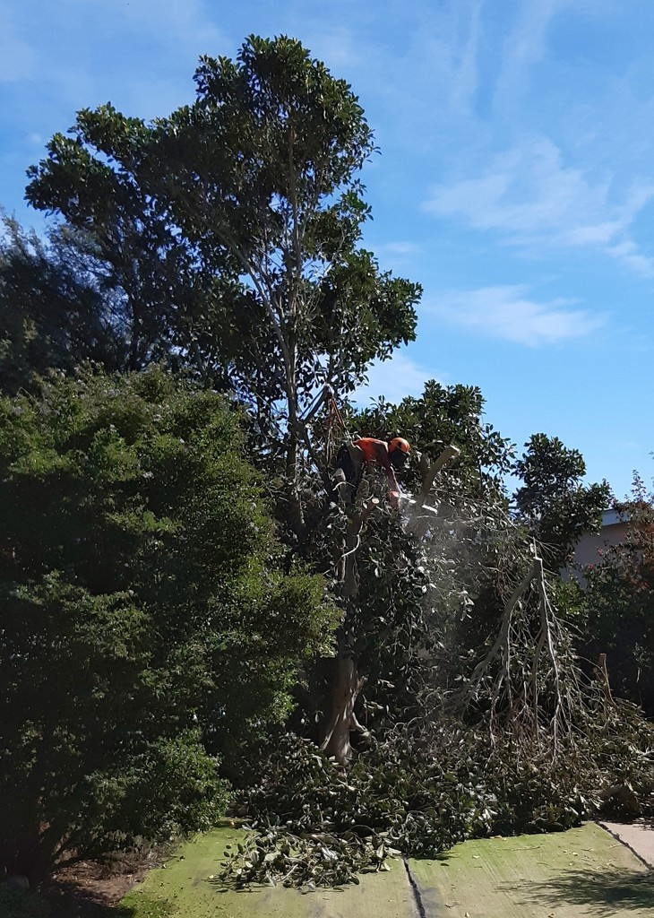 Tree Surgery  by salza