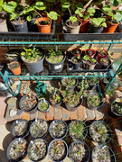 3rd Apr 2021 - 3rd April Seedlings, Cuttings and grasses