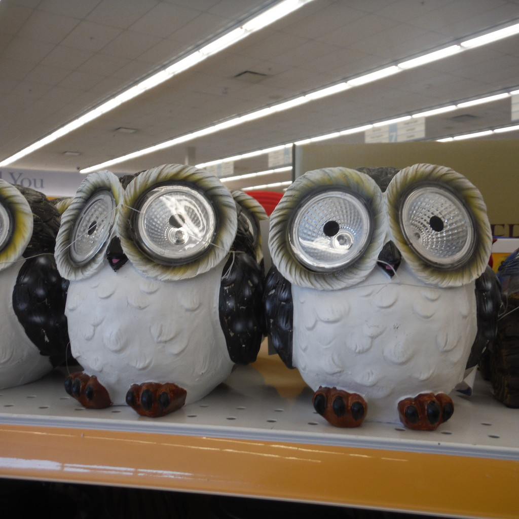 Owls #2: Less Fluffy Owls by spanishliz