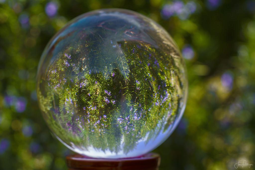 Glass Ball Rosemary  by jgpittenger