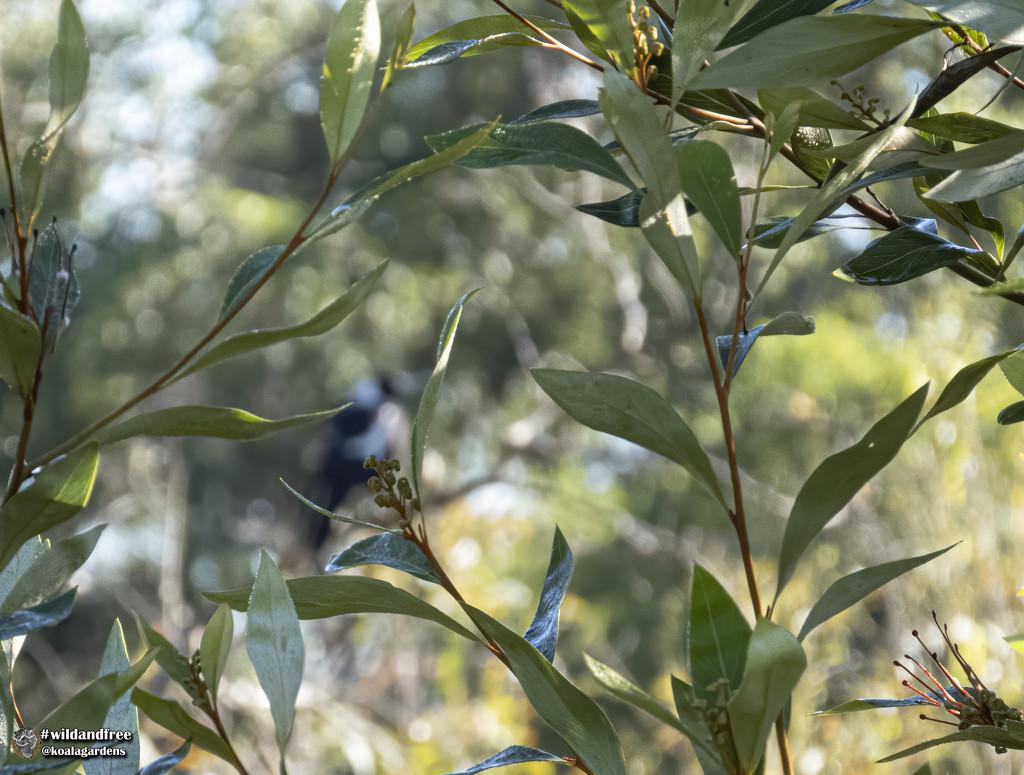 bokeh-licious by koalagardens