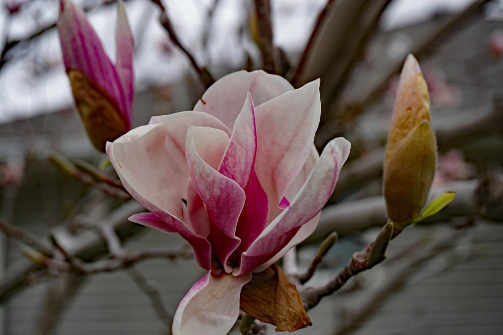 Tulip tree by larrysphotos