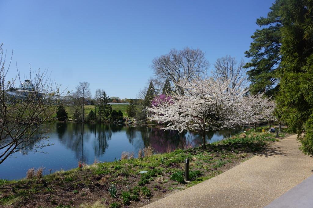Springtime in the Garden by allie912