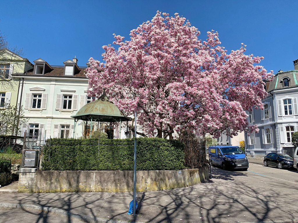 Spring in town.  by cocobella