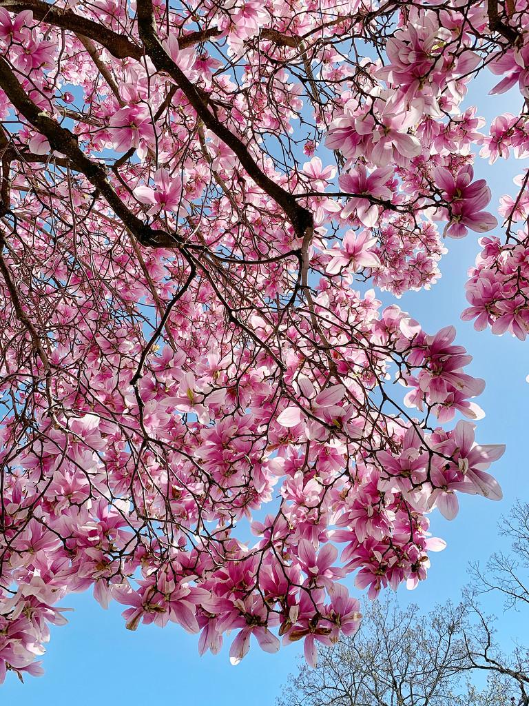 Spring.  by cocobella