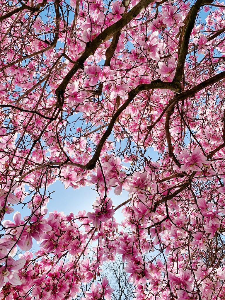 Pink spring.  by cocobella