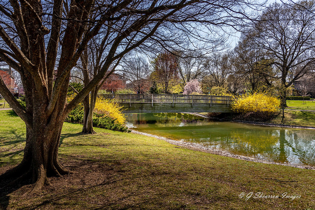 Garnish of Spring Color at the Bridge by ggshearron