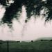 Landscape 37 - cows