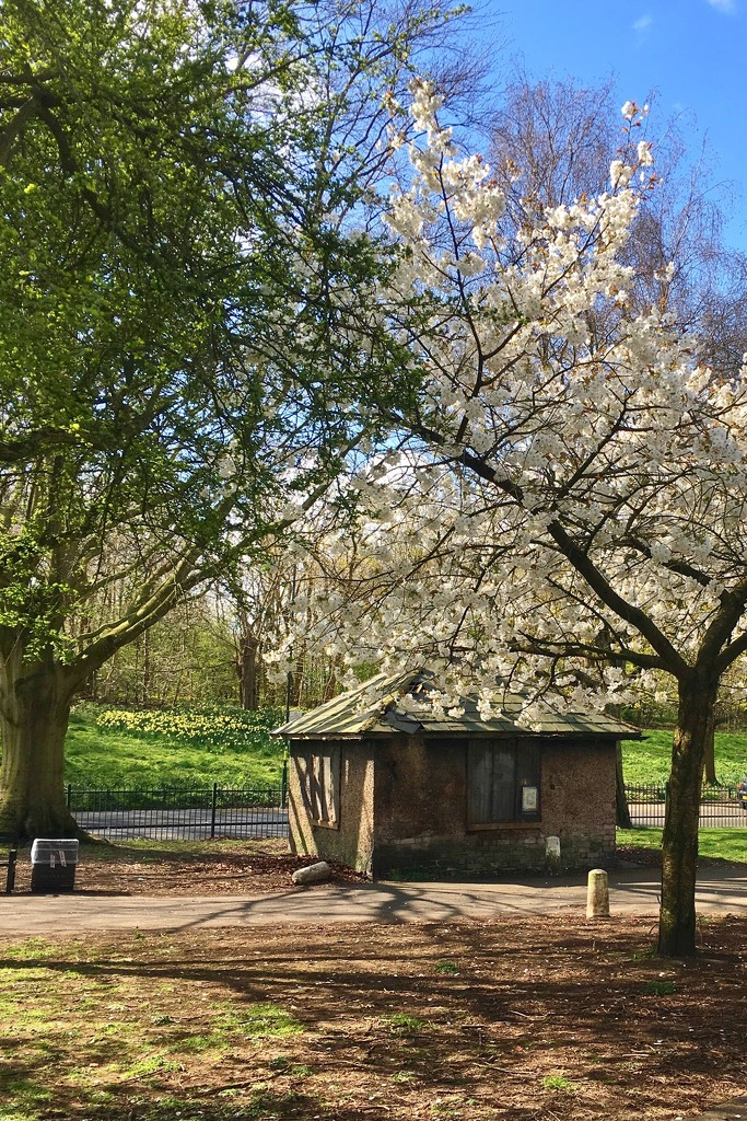 Spring hut by pattyblue