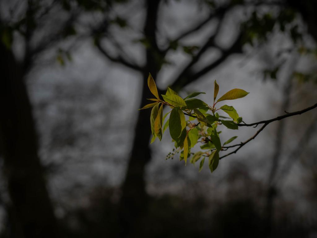 Spring by haskar