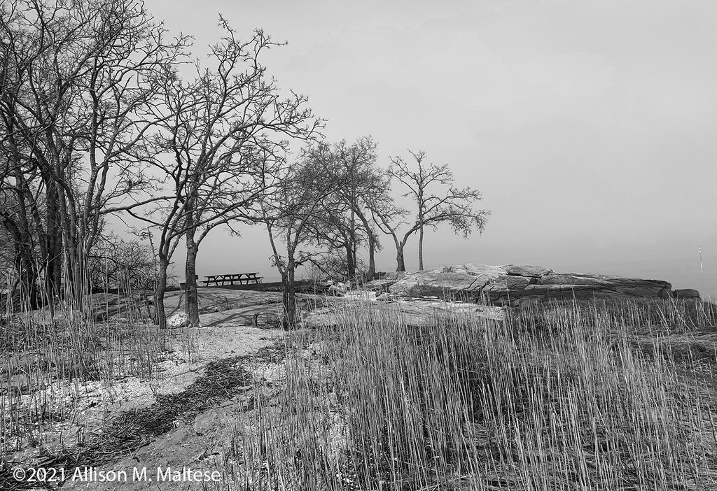 Chaffinch Island Trees by falcon11