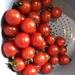 Random tomatoes